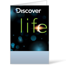 Discover Life Bulletin