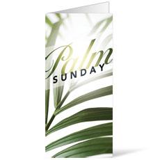 Palm Glow Bulletin