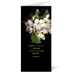 Illuminated Spring Bulletins