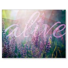 Alive Banner