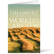 Reflections Harvest Bulletin