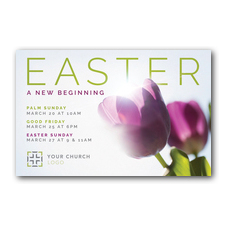 Easter Purple Tulips Postcard