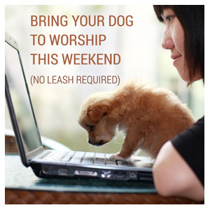 Bring Your Dog To Worship Social Media Ad Packages